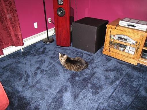 Cat Listening Styles-tigger2.jpg