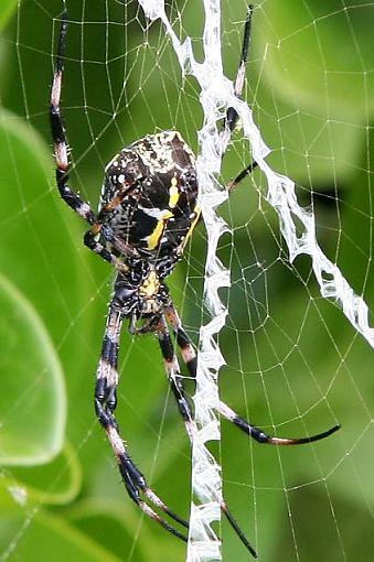 The revolution has begun!-spider.jpg