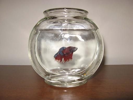 Betta Fish-img_0485.jpg