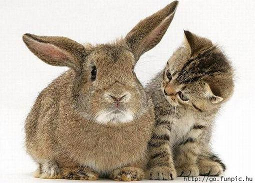 Our family has expanded again.-rabbit-kitty.jpg
