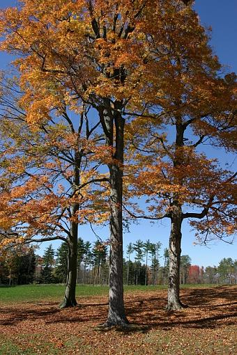Fall color-dh000016-smallest.jpg