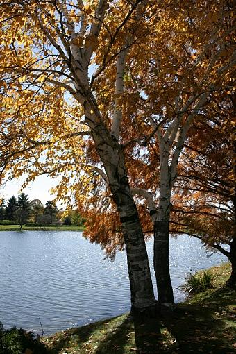 Fall color-dh000015-smallest.jpg