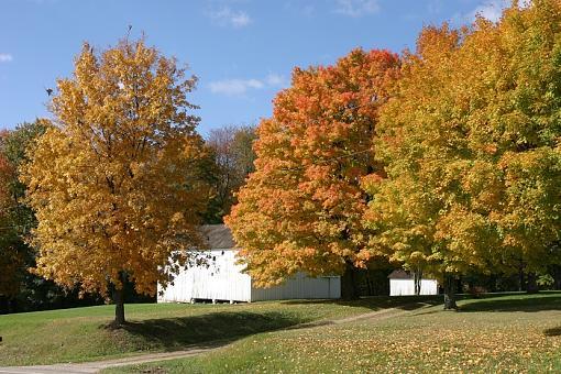 Fall color-231-smaller-file.jpg