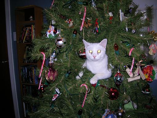 Merry Christmas, folks-nao-109.jpg