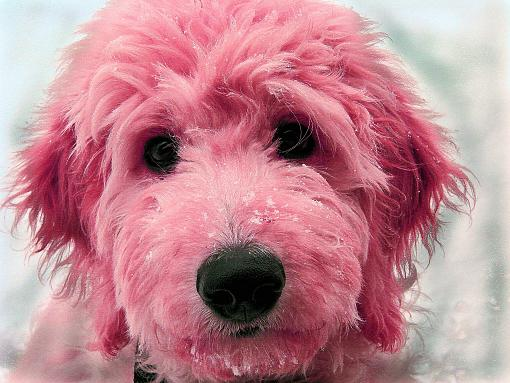 National Geographic's photo contest winners-pink-charlie.jpg