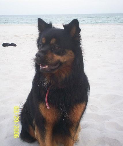 Do Dogs go to heaven?-roxie-resize2.jpg