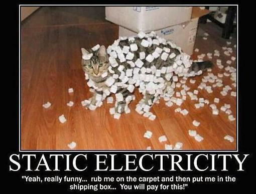 Joke of the Day-kitty-peanuts.jpg