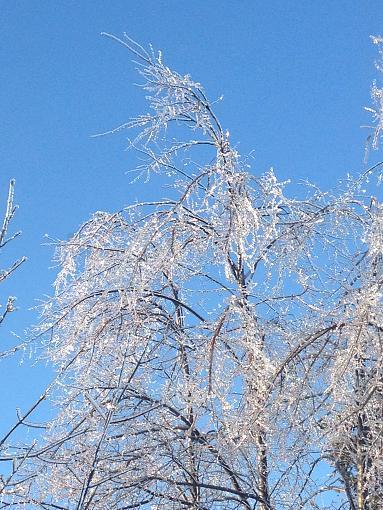 Ice Storm 2013-img_0477.jpg
