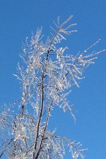 Ice Storm 2013-933912_10151745510807132_1363997540_n.jpg