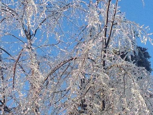 Ice Storm 2013-1528602_10151745506517132_2136728549_n.jpg