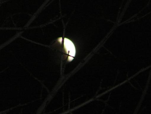 Dark side of the moon-eclipse-tree.jpg