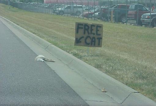 speakers as cat scratching posts-freecat.jpg