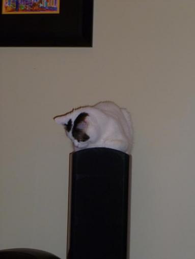 Cat-Proofing Your Floorstanding Speakers-bad-stanley.jpg
